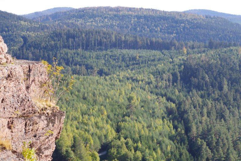 Vue sur la forêt vosgienne depuis le Rocher de Dabo